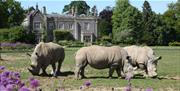 Rhinos on the lawn, Cotswold Wildlife Park & Gardens